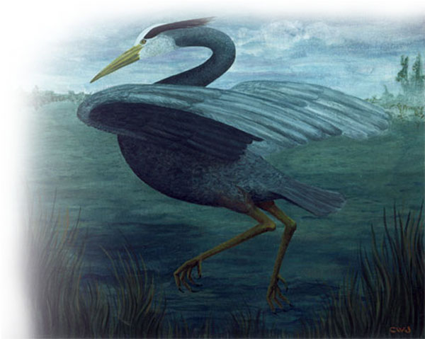 Heron by Cynda Warren Joyce